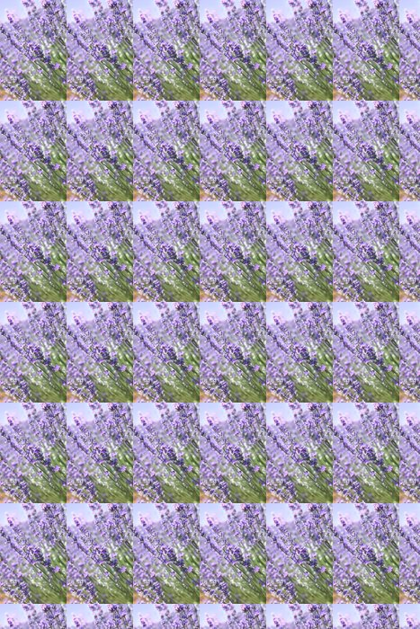 Vinylová Tapeta Lavender květiny na poli detailní - Květiny