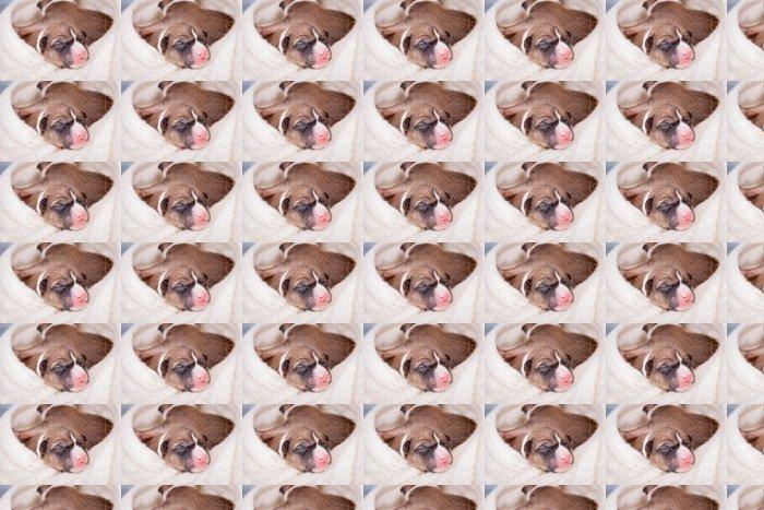 Vinylová Tapeta Malé Roztomilý novorozenec basenji štěně (první den) - Savci