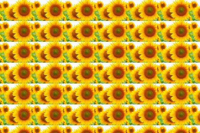 Vinylová Tapeta Close-up slunečnice na poli - Témata