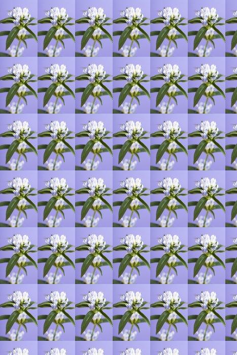 Vinylová Tapeta リ ン ド ウ の 花 - Květiny