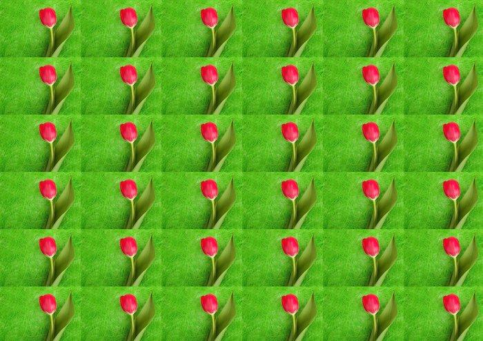 Vinylová Tapeta Červený tulipán - Roční období