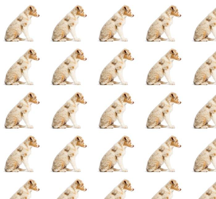 Vinylová Tapeta Boční pohled na australský ovčák štěně, 3,5 měsíce starý - Savci