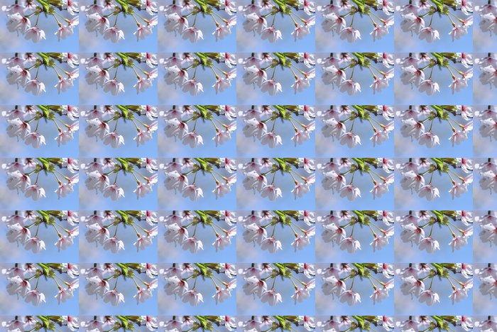 Vinylová Tapeta Prunus yedoensis - Roční období