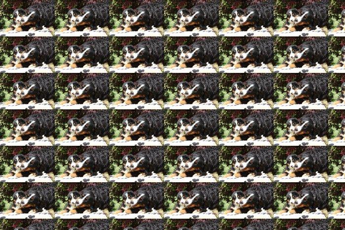 Vinylová Tapeta Bernský salašnický pes fena s štěně na dece - Savci