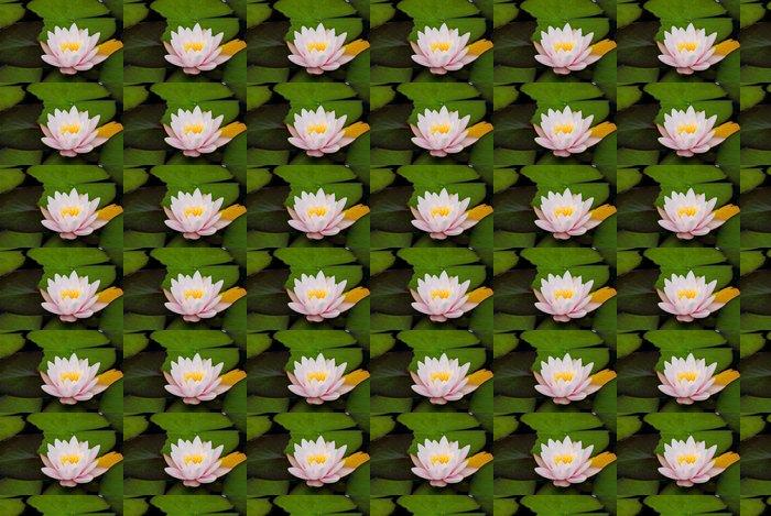 Vinylová Tapeta Zwerg Seerose - Květiny