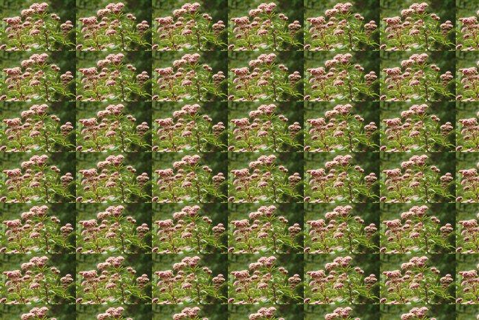 Vinylová Tapeta Eupatoire chanvrine, Aude, Pyreneje - Květiny