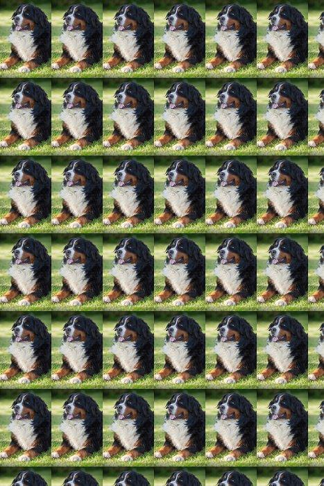 Vinylová Tapeta Bernský salašnický pes (Berner Sennenhund, Bernois) - Savci