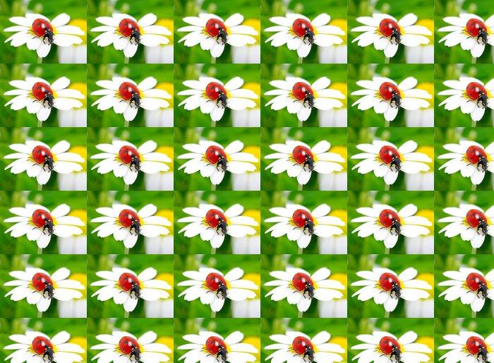 Vinylová Tapeta Beruška na květu - Ostatní Ostatní