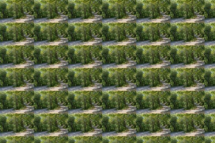 Vinylová Tapeta Cesta přes podrostu - Lesy