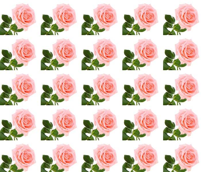 Vinylová Tapeta Krásná růže izolovaných na bílém - Témata