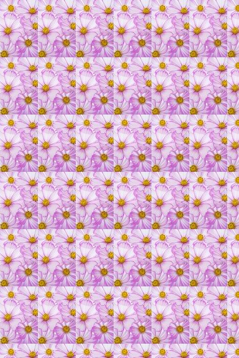 Vinylová Tapeta Cosmos květina - Květiny