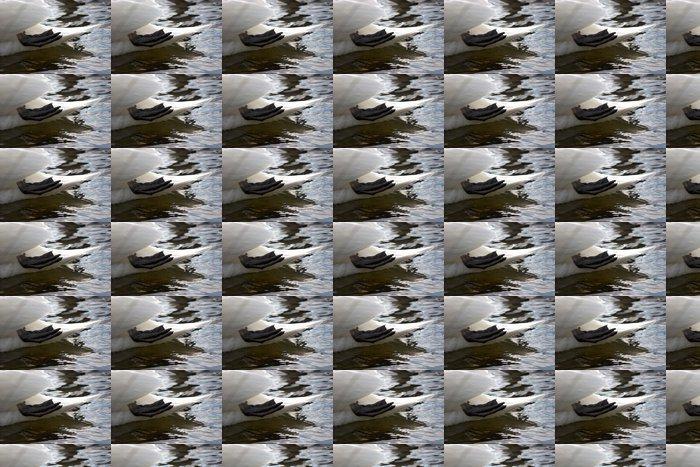 Vinylová Tapeta Tailend labutě - Ptáci