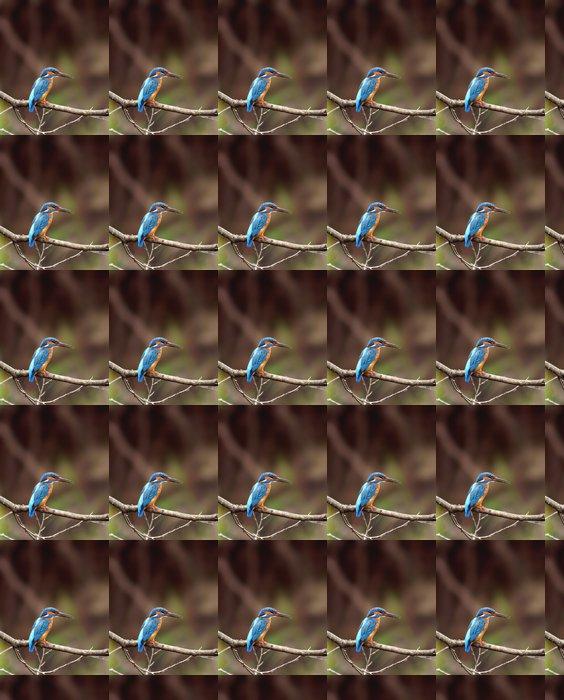 Vinylová Tapeta Halcyon (Alcedo atthis) - Ptáci