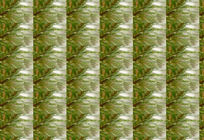 Vinylová Tapeta Waterdrops na firtree - Roční období