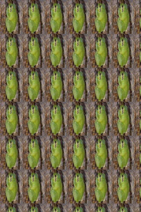 Vinylová Tapeta Rainette meridionale (Hyla meridionalis) - Ostatní Ostatní