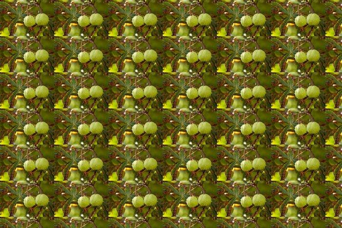 Vinylová Tapeta Chestnut Tree - Rostliny