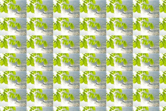 Vinylová Tapeta Transparentní listy jilmu proti řeky - Roční období