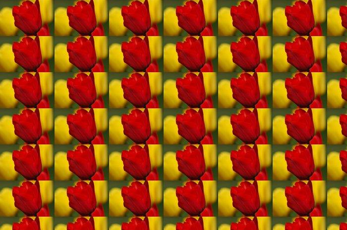 Vinylová Tapeta Žluté a červené tulipány - Květiny