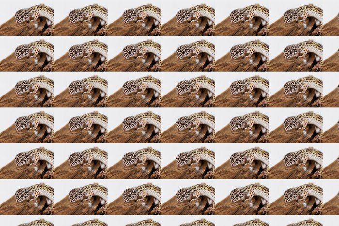 Vinylová Tapeta Leopard gecko - Ostatní Ostatní