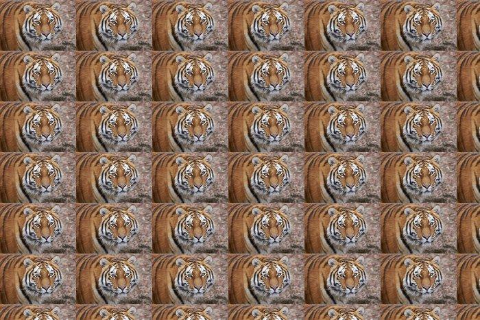 Vinylová Tapeta Tygr Panthera tigris - Savci