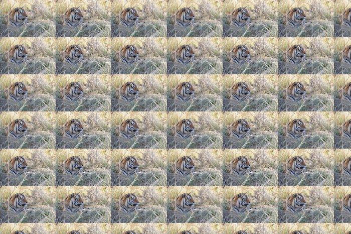 Vinylová Tapeta Portrét záběr bengálského tygra v divočině - Savci