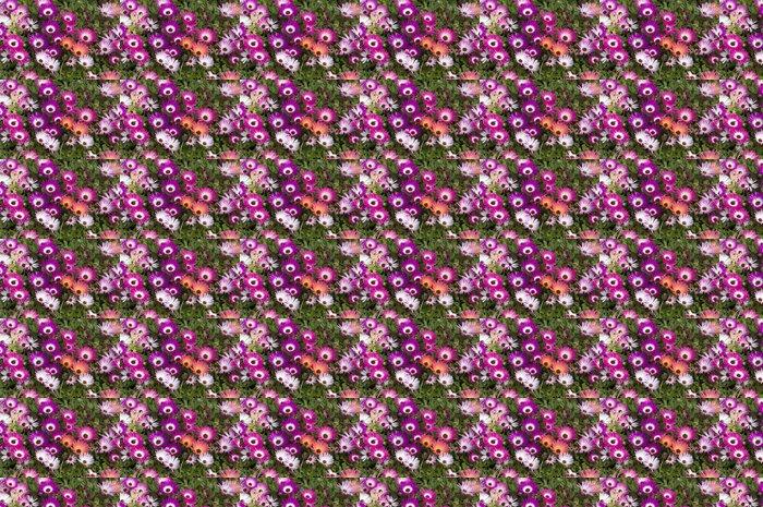 Vinylová Tapeta Mittagsblume; Dorotheanthus bellidiformis - Květiny