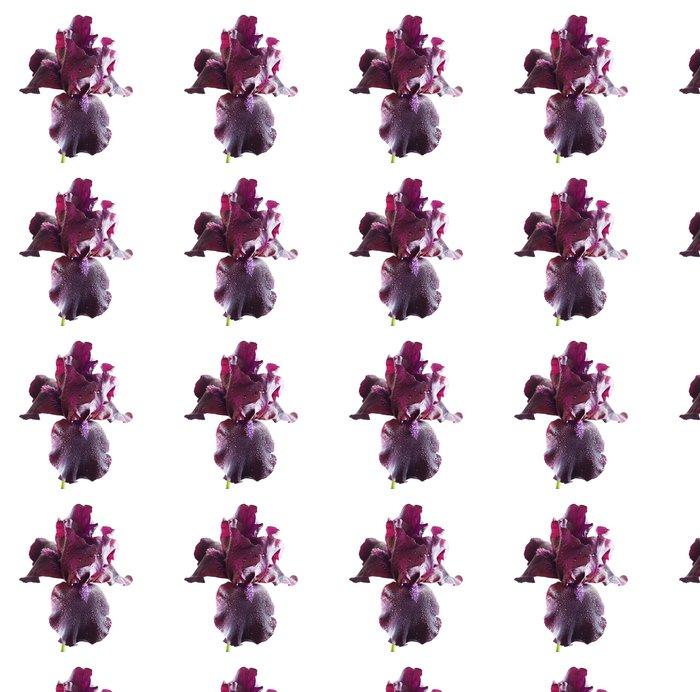 Vinylová Tapeta Fialová iris - Roční období