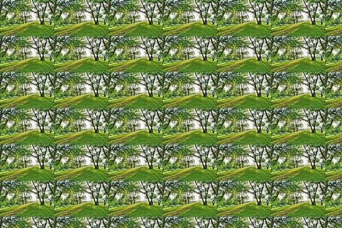 Vinylová Tapeta Zelená pružina parku - Lesy
