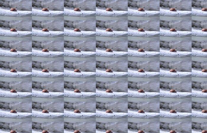 Vinylová Tapeta Hlemýžď v Thajsku - Ostatní Ostatní