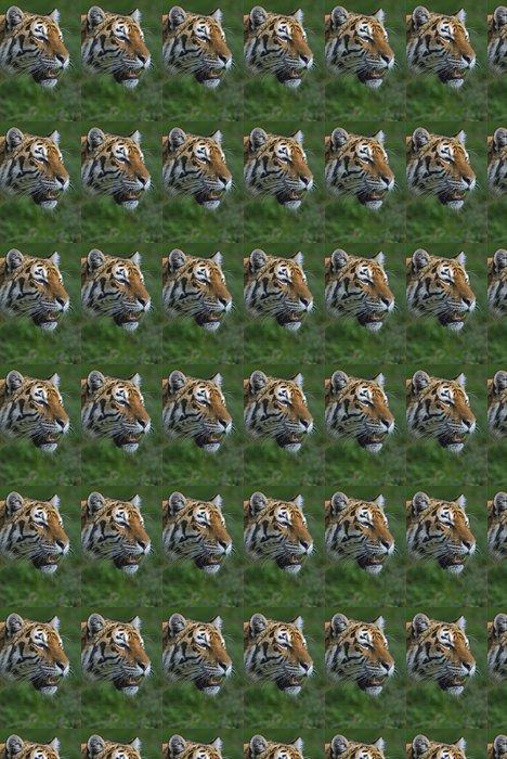 Vinylová Tapeta Portrét tygra - Savci