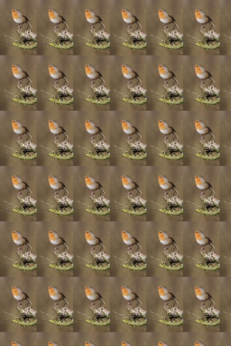 Vinylová Tapeta Robin (Erithacus rubecula) - Ptáci