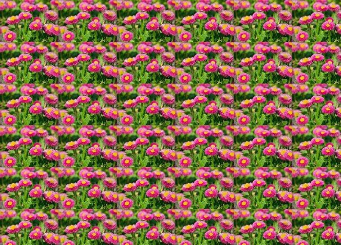 Vinylová Tapeta Bellis perennis - Květiny