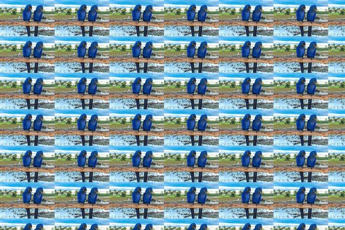 Vinylová Tapeta Modrý papoušek v Pantanal, Brazílie - Brazílie
