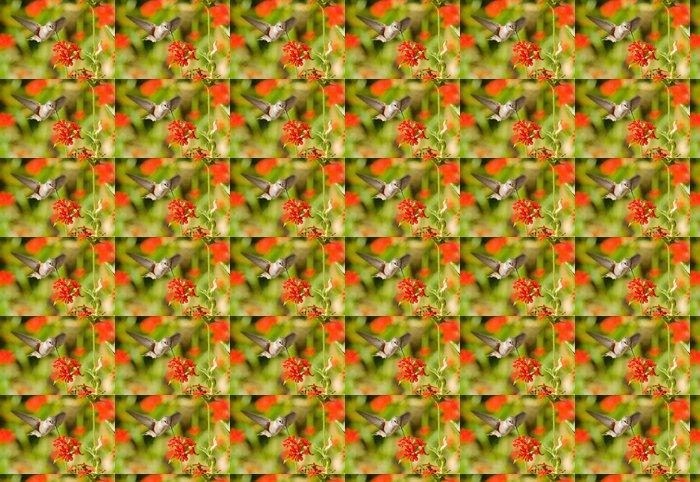 Vinylová Tapeta Rufous kolibřík krmení na maltézského kříže květiny - Ptáci