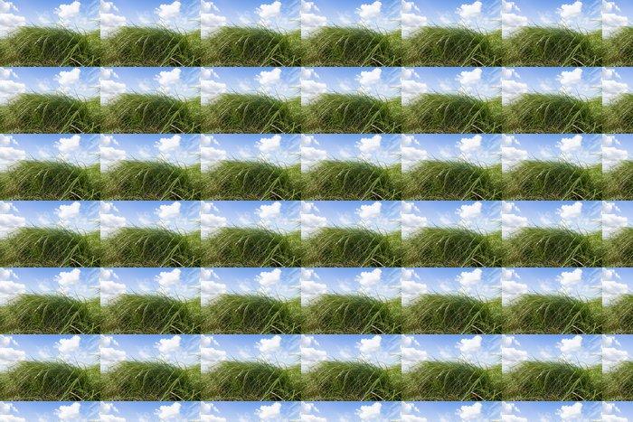 Vinylová Tapeta Zelené louce. Modrá obloha s mraky. - Roční období
