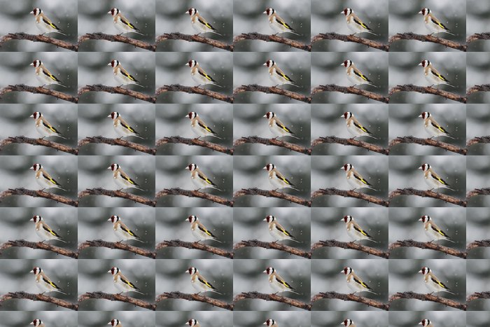 Vinylová Tapeta Stehlík (Carduelis carduelis) na pobočku v sněží - Ptáci