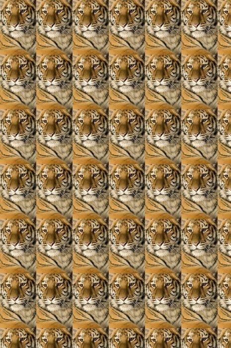 Vinylová Tapeta Tiger cub (5 měsíců) - Savci
