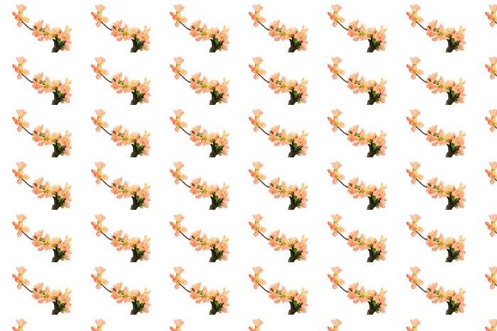 Vinylová Tapeta Květ japonské kdoule - Květiny