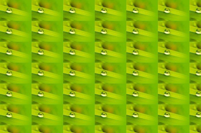 Vinylová Tapeta Kropla Rosy 2 - Rostliny