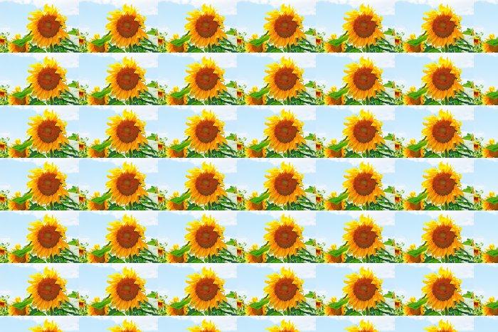Vinylová Tapeta Žlutá slunečnice hlava - Květiny