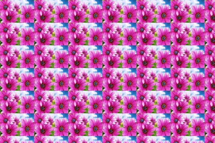 Vinylová Tapeta Květy Gazania proti modré obloze. (Splendens rod Asteraceae - Květiny