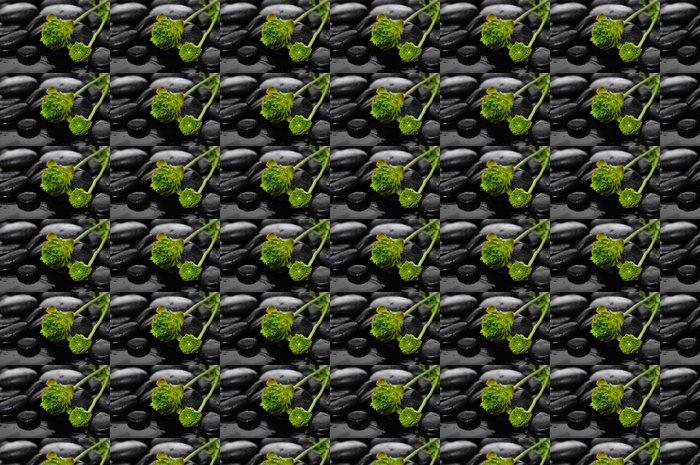 Vinylová Tapeta Vleže zelené hortenzie na kameni ve vodních kapek - Životní styl, péče o tělo a krása