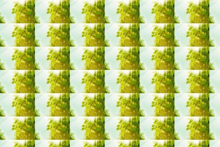 Vinylová Tapeta Zelený svět, abstraktní ekologické pozadí pro svůj design - Roční období