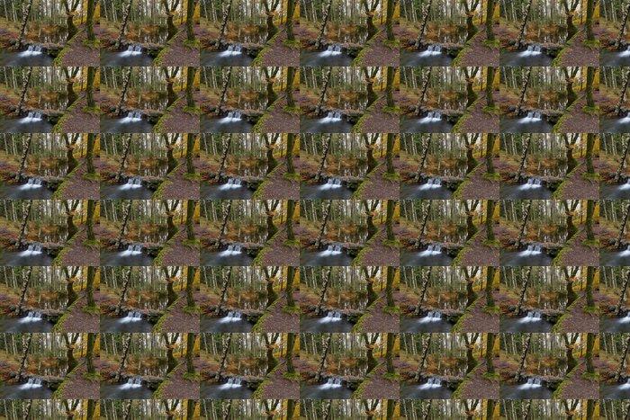 Vinylová Tapeta Podzimní lesy se žlutými javory a potoka s kameny a FO - Lesy