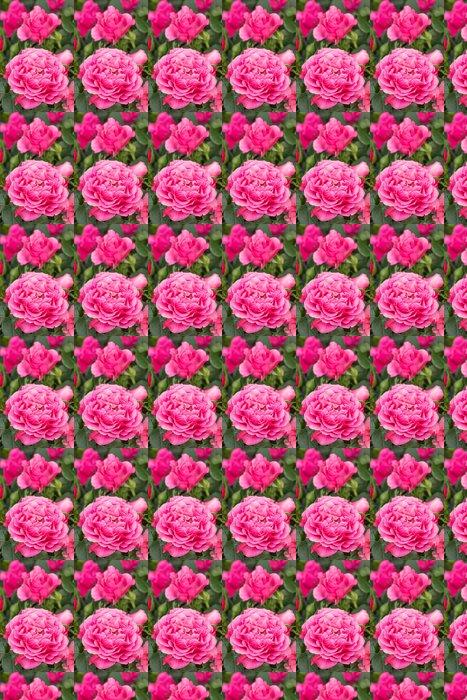 Vinylová Tapeta ピ ン ク の バ ラ - Květiny