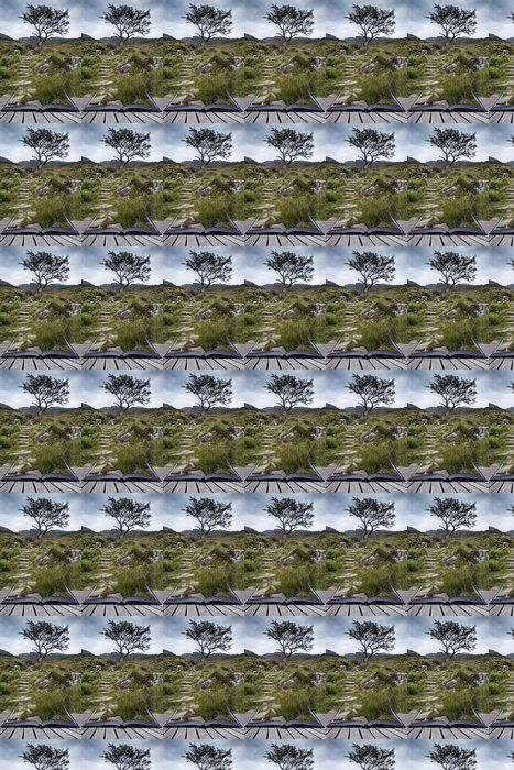 Vinylová Tapeta Osamělý strom na hoře a pěšina krajiny v létě conce - Jiné pocity