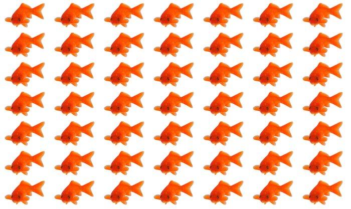 Vinylová Tapeta Zlatá rybka - Vodní a mořský život