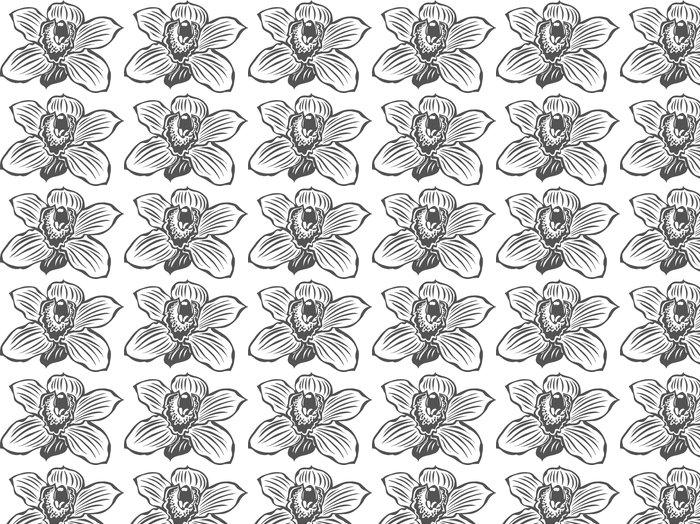 Vinylová Tapeta Orchid Vinyl Připraveno vektorové ilustrace - Květiny