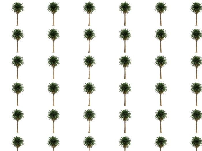 Vinylová Tapeta Isoslated velký kokosová palma - Nálepka na stěny