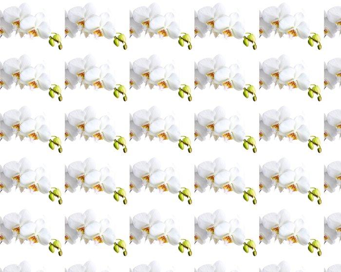 Vinylová Tapeta Krásné orchideje, izolovaných na bílém - Nálepka na stěny